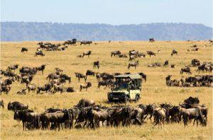 Kenya safari parks