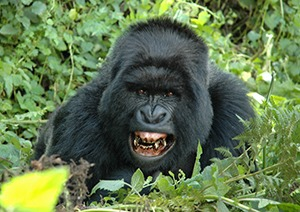 10 Days Uganda Gorilla Safari & Wildlife Tour