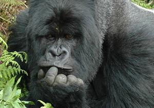 3 Days Uganda Gorilla Safari Tour to Bwindi