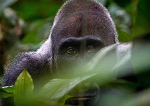 6 Days Uganda Gorilla Safari & Wildlife Tour