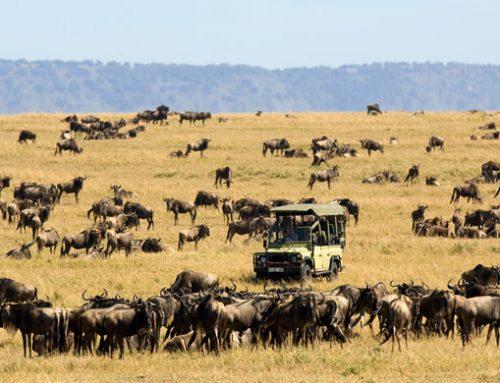 Mountain Kenya National Park