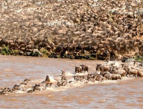 Greatest wonder's of the world-Wildebeest migration
