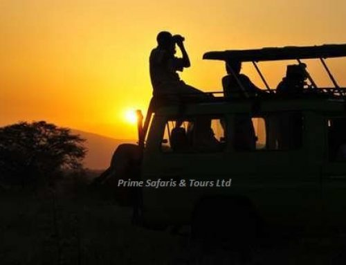 How to benefit from a game drive on your Kenya Wildlife safari