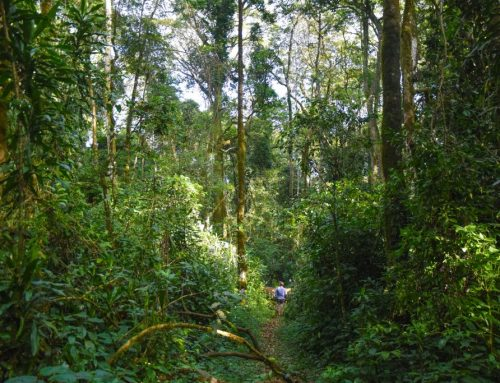 Take a nature walk in Kenya's secreted charms with unique intimacy! -Kenya safari News