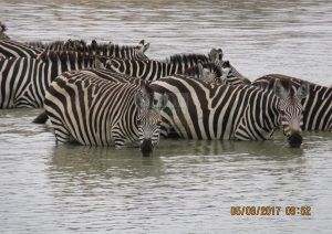 3 Days Kenya Safari to Tsavo West & Amboseli National Park