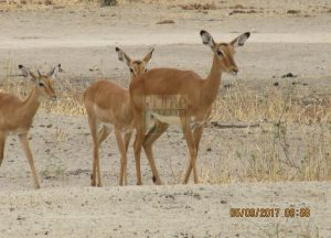 3 Days Kenya Wildlife Safari to Amboseli National Park