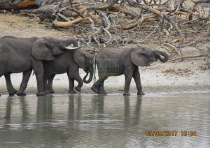 3 Days Kenya Safari to Samburu National Park