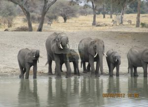 10 Days Classic Kenya Safari Tour in Adamson