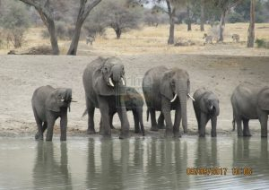 3 Days Kenya Wildlife Safari to Maasai Mara Game Reserve