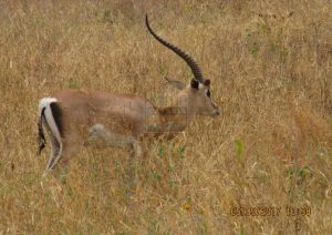 4 Days Kenya Safari Holiday to Mombasa Beach