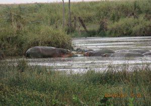 10 Days Samburu Masai Mara & Chyulu Hills Kenya Safari