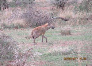 8 Days Maasai Mara Kenya Safari - Samburu, Aberdare, Nakuru Parks