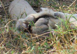 13 Days Kenya Safari Tour & Tanzania Deluxe Safari