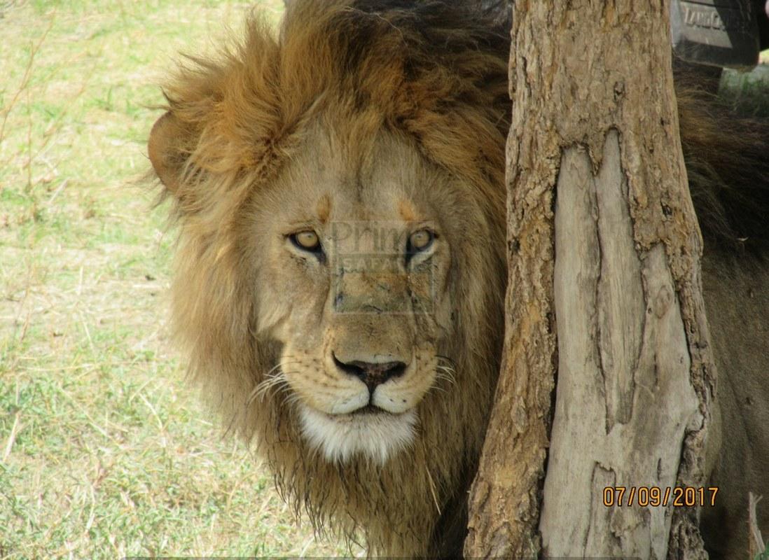 9 Days Kenya Tanzania Predator Safari Tour