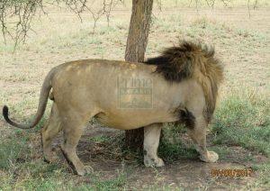 7 Days Maasai Mara Kenya Safari - Samburu Tour