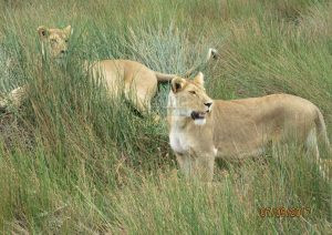 7 Days Kenya Safari Tour Classic Adventure