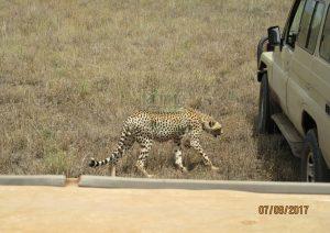 10 Days Kenya Safari, Fly-in Kenya Safari tour Massai Mara, Chuyu Hills