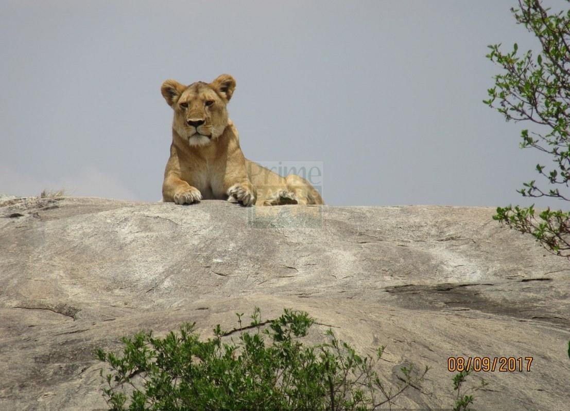 12 Days Maasai Mara Kenya Safari, Nakuru, Amboseli & Tsavo West,