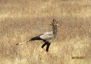 12 Days Kenya Wildlife Safari & Beach Holiday Kenya tour