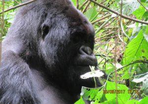 4 Days Rwanda Gorilla Adventure to Volcanoes NP & Cultural Tour