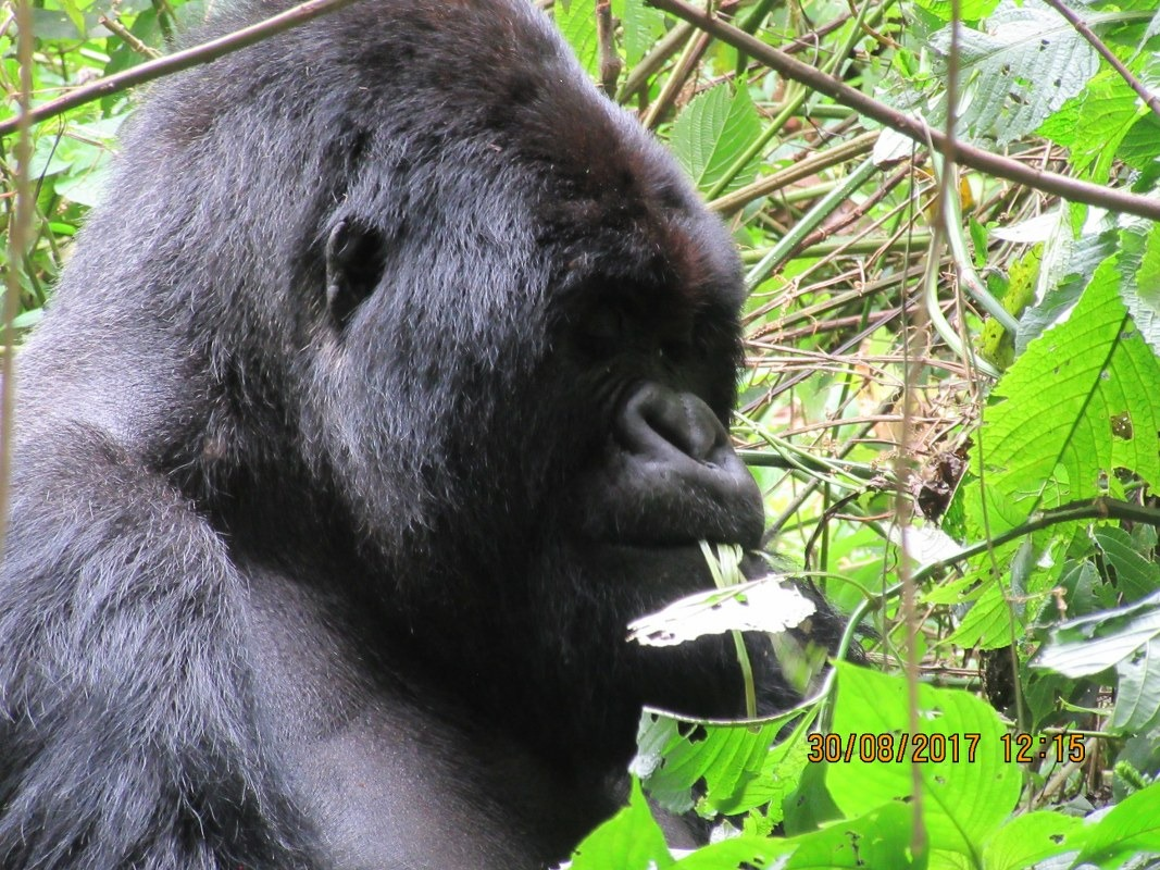 4 Days Rwanda Gorilla Adventure to Volcanoes NP & Cultural Tour