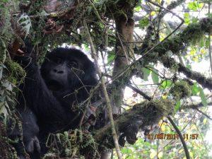 10 Days Rwanda Gorilla Safari & Chimp Trekking