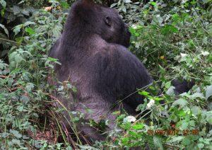 12 Days Rwanda Gorilla Safari & hiking Bisoke Volcanoes