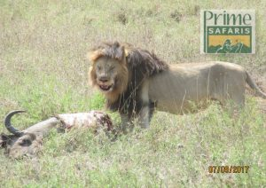 14 Days Tanzania Kenya Wildlife Safari Tour