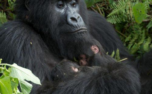 Amahoro Family