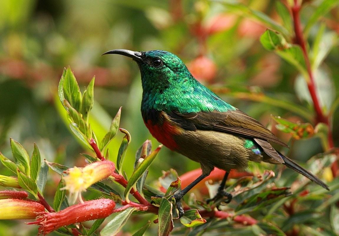 Birding Safaris Rwenzori Mountains National Park Uganda