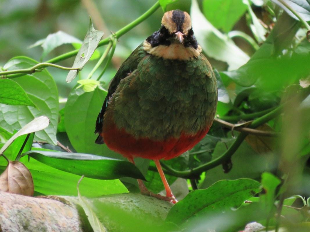 Birding Safaris in Semuliki National Park