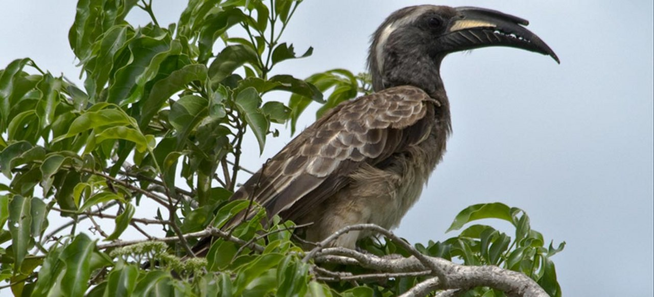 Birding Safaris in Uganda in lake mburo national park