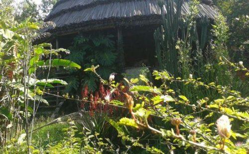Cuckoo land Lodge