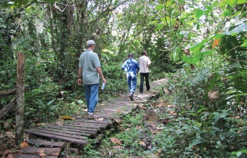 Hiking Safaris on the Bwindi forest