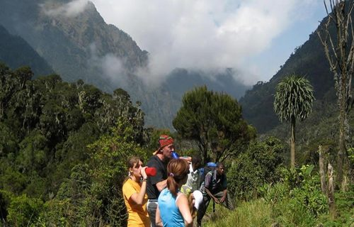 Mountain Hiking Rwenzori Mountains National Park Uganda