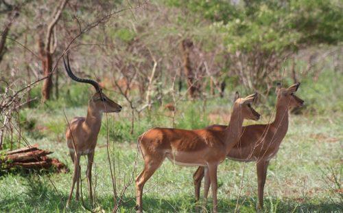 Mutamba campsite Akagera National Park Rwanda