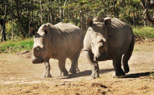 Rhino Sanctuary in Lake Nakuru National Park