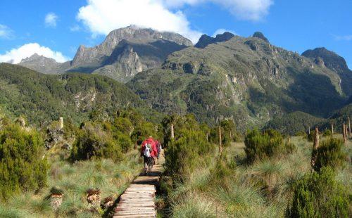 The Sasa Trail Mount Elgon National Park Uganda