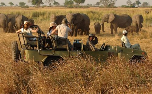 Uganda tour Wildlife Game Drives kidepo valley