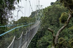 canopy walk in nyungwe national park