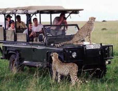 Tips on how to enjoy a Kenya wildlife safari game drive – Kenya safari News