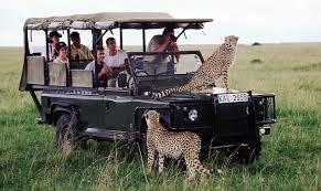 cheetahs in Nairobi park