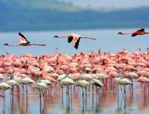 Take a day trip to Lake Nakuru National Park Kenya – Kenya safari News