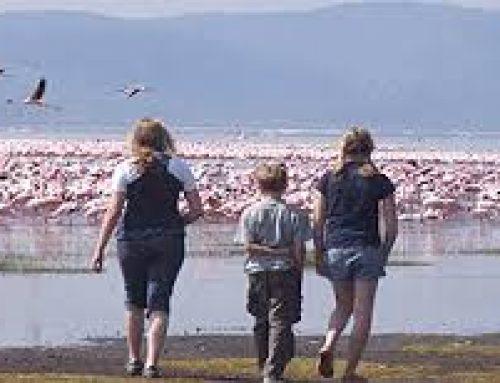 The best one day birding Kenya safari;  Lake Nakuru National Park – Kenya safari News