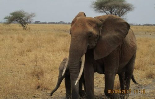 13 Days Kenya Tanzania Wildlife Safari