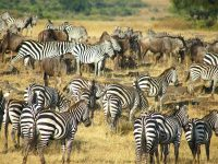 17 Days Kenya Tanzania Zanzibar Wildlife Safari & Beach Vacation