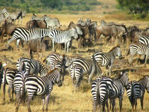 17 Days Kenya Tanzania Zanzibar Wildlife Safari & Beach Vacation
