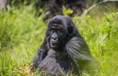 18 Days Comprehensive Safari in Uganda