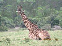2 Days Tanzania Safari to Ngorongoro National Park