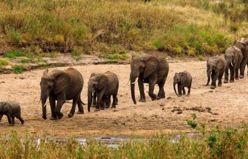 2 Days Tanzania Safari to Tarangire National Park